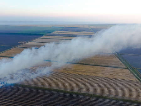 kuban: Burning straw in the fields after harvesting wheat crop. The burning of rice straw in the fields. Smoke from the burning of rice straw in checks. Fire on the field.