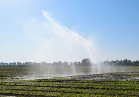 sucks: Irrigation system in the field of melons. Watering the fields. Sprinkler. Stock Photo