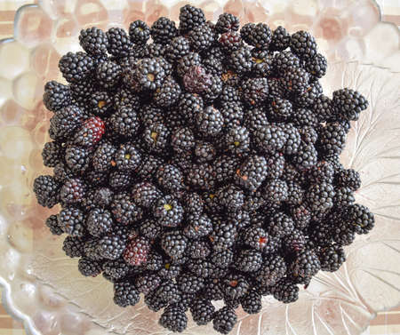 Plate with berries black blackberries. Fruits berries on the table.