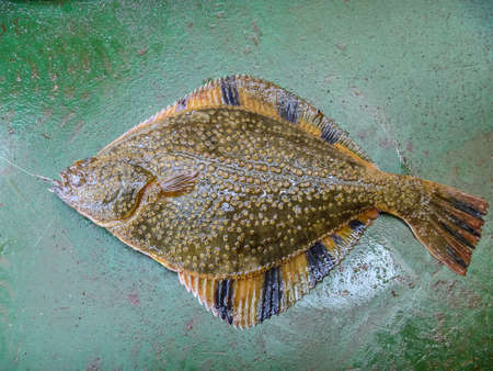 Flounder on the deck. Fishing on the boat. Bottom fish.