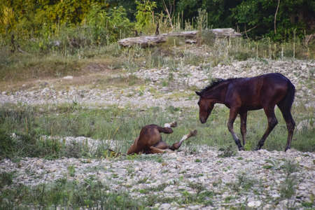 shrinking: Horses walk in line with a shrinking river. The life of horses. Stock Photo