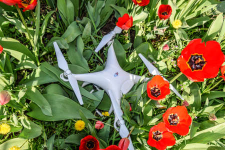Krasnodar, Russia - April 14, 2017: Quadrocopter DJI Phantom 4 is located on a meadow with red tulip flowers. Editorial