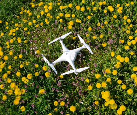 Krasnodar, Russia - April 14, 2017: Quadrocopter DJI Phantom 4 is on a clearing with dandelion flowers.