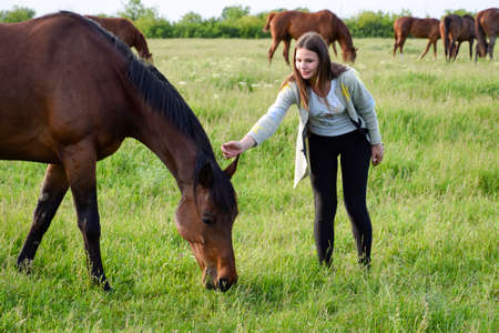 greengrass: The girl is stroking the horse. Girl with horses in the pasture