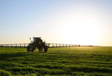 Traktor mit hohen Rädern macht Dünger auf Jungweizen. Die Verwendung von fein dispergierten Spritzchemikalien. Traktor auf dem Sonnenuntergang Hintergrund. Standard-Bild - 78495330