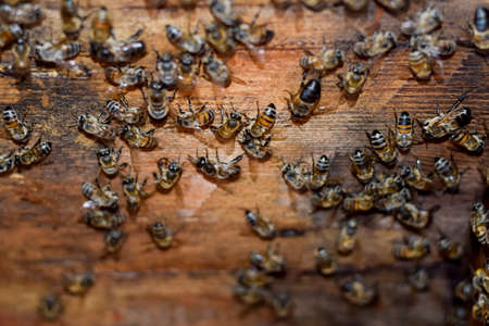 apiculture: A beehive, a view from the inside. The bee-hut. Honey bee. Entrance to the hive. Honey bees on the home apiary. The technology breeding of honey bees.