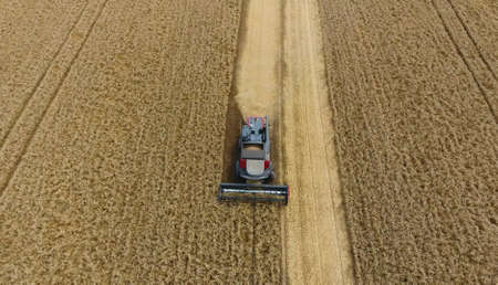 agronomist: Harvesting wheat harvester. Agricultural machines harvest grain on the field. Agricultural machinery in operation. Stock Photo