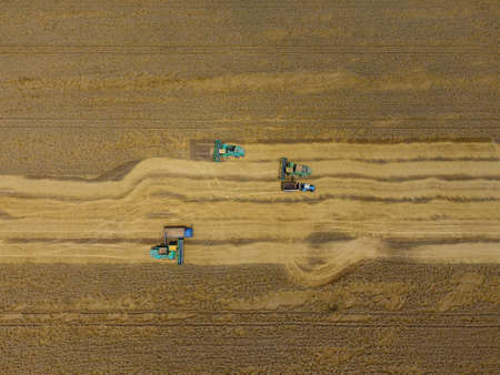 machinery: Harvesting wheat harvester. Agricultural machines harvest grain on the field. Agricultural machinery in operation. Stock Photo