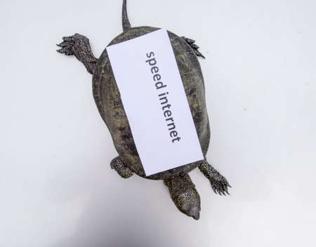 Internet speed. A bad internet symbol. Low download speed. Slow internet. Ordinary river tortoise of temperate latitudes. The tortoise is an ancient reptile