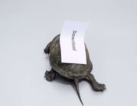 Download. A bad internet symbol. Low download speed. Slow internet. Ordinary river tortoise of temperate latitudes. The tortoise is an ancient reptile