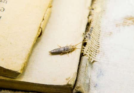 곤충 종이 - 은박에 먹이. 해충 책과 신문. 스톡 콘텐츠