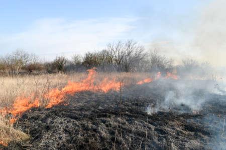 Brennen trockenes Gras und Schilf. Reinigen Sie die Felder und Gräben der Dickichte von trockenem Gras.