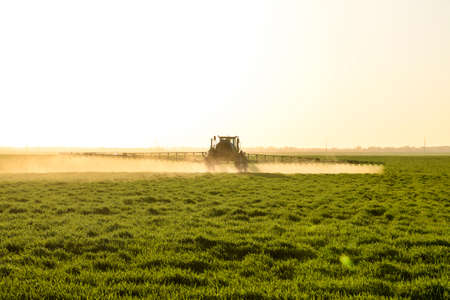 Tractor with high wheels is making fertilizer on young wheat. The use of finely dispersed spray chemicals. Tractor on the sunset background.