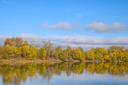 Autumn landscape. River and river bank with yellow trees. Willow and poplar on the river bank