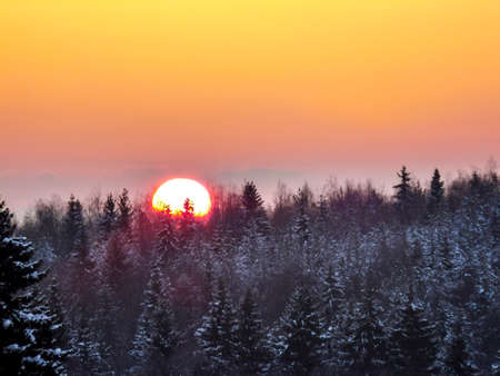 Sunset over the winter taiga. The sun sits behind the trees