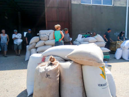Village Elitnyy, Russia - August 07, 2017: Granting of grain to the co-investors of landed property. Getting wheat and barley in bags in the warehouse. Editorial