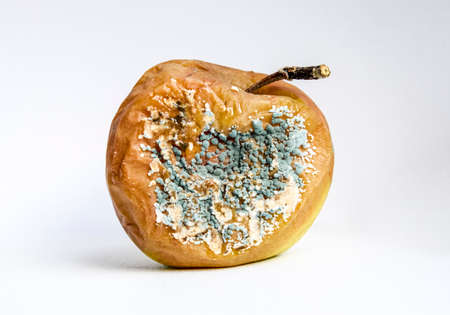 A rotten apple covered with a mold. Stockfoto