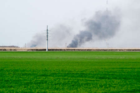 The fire is far away in the field. Clubs of smoke from the burning of reeds and cane