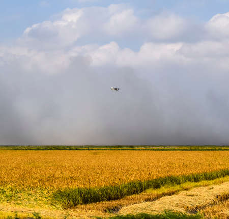 An agricultural plane flies over a field of rice. Air application of herbicides. Stock Photo