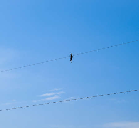 Dead bird on the wire. An electric bird killed by an electric current