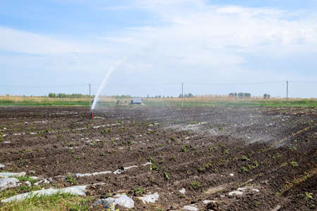 Irrigation system in field of melons. Watering the fields. Sprinkler.