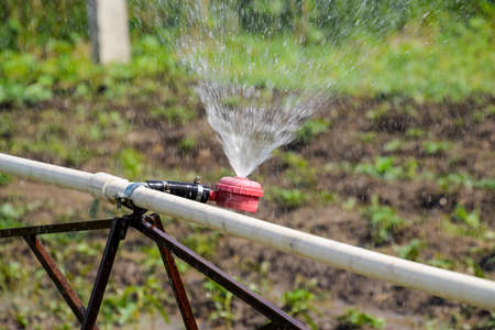 Water sprinkler for watering in the garden. Watering in the garden. Stock Photo