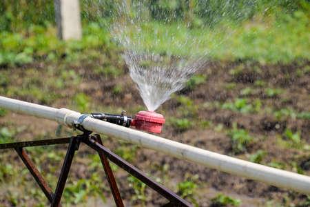Water sprinkler for watering in the garden. Watering in the garden. Foto de archivo