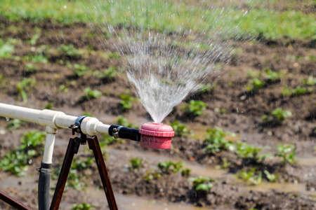 Water sprinkler for watering in the garden. Watering in the garden. Фото со стока
