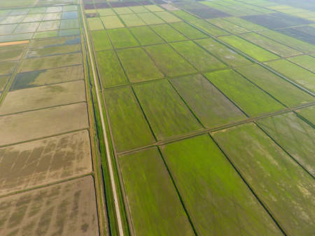 The rice fields are flooded with water. Flooded rice paddies. Agronomic methods of growing rice in the fields. Flooding the fields with water in which rice sown. View from above. Imagens