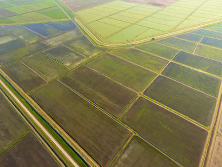 The rice fields are flooded with water. Flooded rice paddies. Agronomic methods of growing rice in the fields. Flooding the fields with water in which rice sown. View from above. Stock Photo