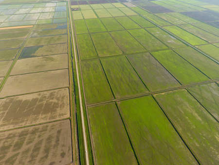 The rice fields are flooded with water. Flooded rice paddies. Agronomic methods of growing rice in the fields. Flooding the fields with water in which rice sown. View from above. 스톡 콘텐츠