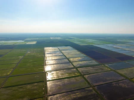 The rice fields are flooded with water. Flooded rice paddies. Agronomic methods of growing rice in the fields. Landscape in front of the sun. Flooding the fields with water in which rice sown. View from above.