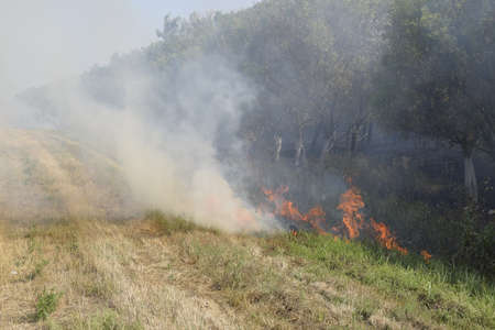 Fire in the forest. Fire and smoke in the forest litter. The grass is burning in the forest. Forest fires.