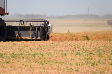 Harvesting peas with a combine harvester. Harvesting peas from the fields Banco de Imagens