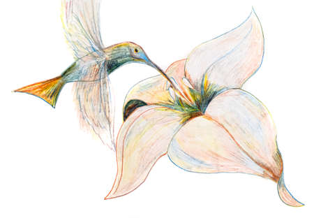 Drawing a pencil like a hummingbird hovers over a flower and drinks nectar