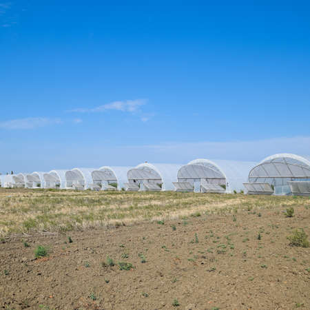 A group of greenhouses for growing tomatoes and cucumbers. Growing tomatoes in the greenhouse. Seedlings in the greenhouse. Growing of vegetables in greenhouses