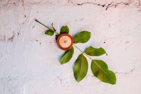 Bimetallic thermometer on a white wall. A sheet of walnut.