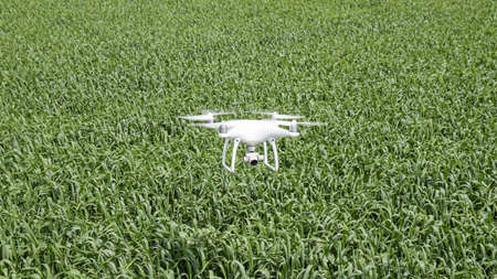 Flying white quadrocopters over a field of wheat. Flying gadget for video. Reklamní fotografie