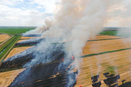 Burning straw in the fields of wheat after harvesting. The pollution of the atmosphere with smoke.