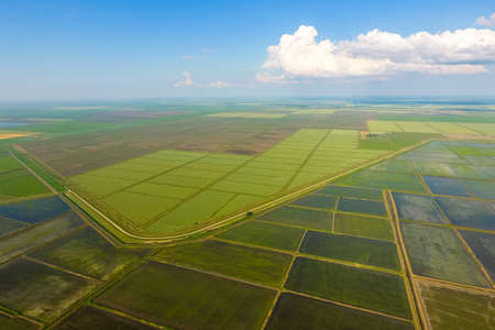 The rice fields are flooded with water. Flooded rice paddies. Agronomic methods of growing rice in the fields. Flooding the fields with water in which rice sown. View from above. 版權商用圖片