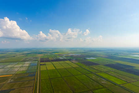The rice fields are flooded with water. Flooded rice paddies. Agronomic methods of growing rice in the fields. Flooding the fields with water in which rice sown. View from above. Фото со стока