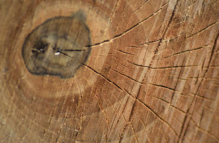 Texture of a saw cut of a log. The sawn tree and its year rings.