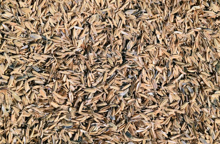 The detail of rice husks for background