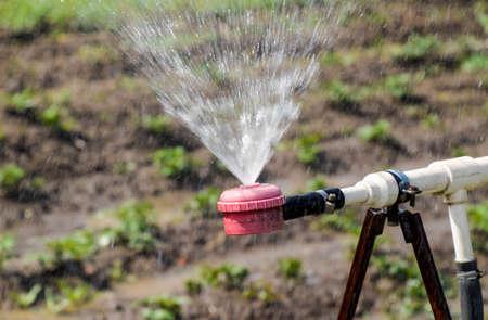 Water sprinkler for watering in the garden. Watering in the garden. Reklamní fotografie