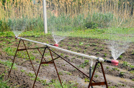 Water sprinkler for watering in the garden. Watering in the garden. Banco de Imagens