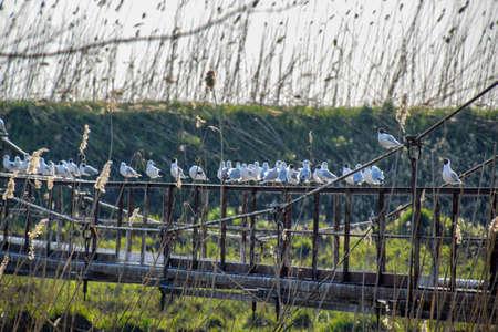 Gulls on a steel bridge sit on the railing. Gulls on a steel bridge Фото со стока