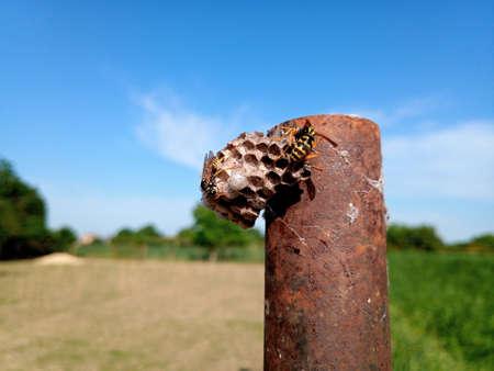 The nest wasps polistov. Hornets nest on a steel post. Reklamní fotografie