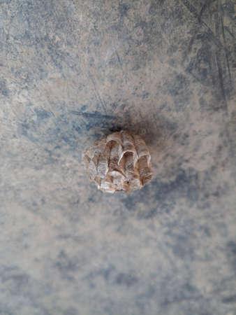 The nest wasps polistov. Hornet nest on rubber mat Reklamní fotografie