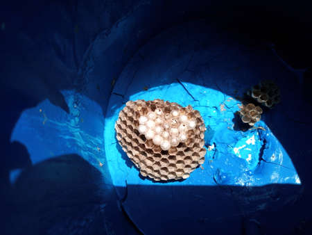 The nest wasps polistov. Hornets nest in a paint can. Stock Photo - 124528521