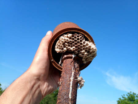 The nest wasps polistov. Hornets nest on a steel post. Stock Photo - 124528629